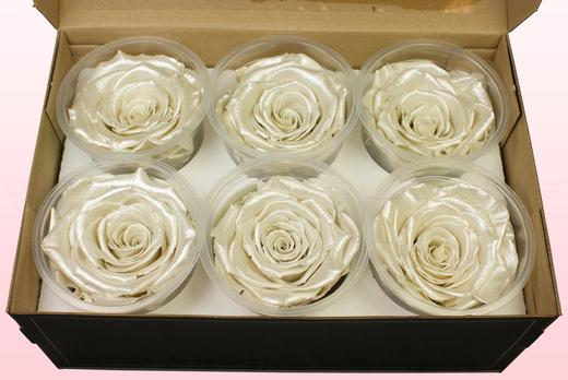 6 Geconserveerde Rozenkoppen, Satin wit, Maat XL