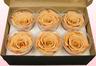 6 Rose Stabilizzate, Toffee, Taglia XL