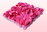1 litre Box Hot Pink Freeze Dried Rose Petals