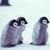 Update_thumb_cute-penguins